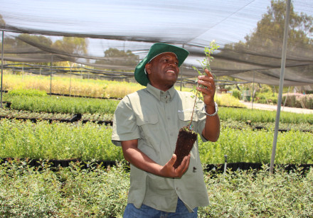 Hiruy Amare with one of his saplings at the KKL-JNF Golani Nursery