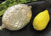 The Succot citron, etrog,  is protectively wrapped in silky flax padding and safeguarded in a covere