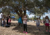 Visitors pick olives at KKL-JNF forests