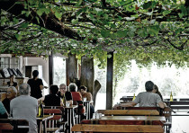 THE TISHBI Restaurant where 'Each man shall sit under his  g tree and vine'