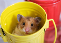 A mouse, illustrative image.