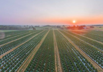 GenCanna hemp field in Kentucky