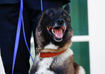 Conan, the U.S. military dog that participated in and was injured in the U.S. raid in Syria that kil