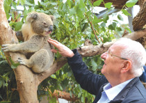 PRESIDENT REUVEN RIVLIN makes friends with a koala bear
