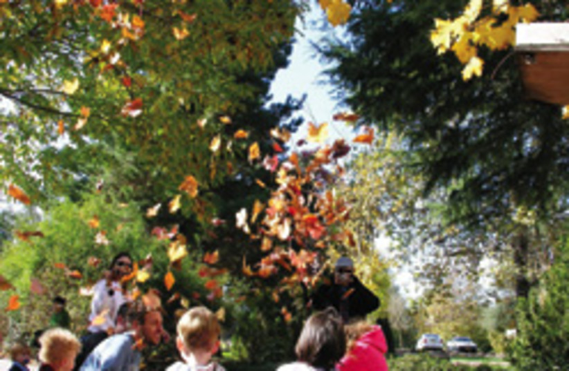 fall in metulla 248.88 (photo credit: )