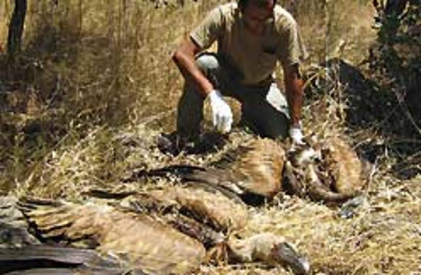 poisoned eagles 248.88 (photo credit: On Valensi)