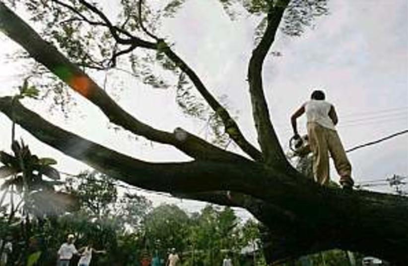 typhoon tree down 298.88 (photo credit: AP)