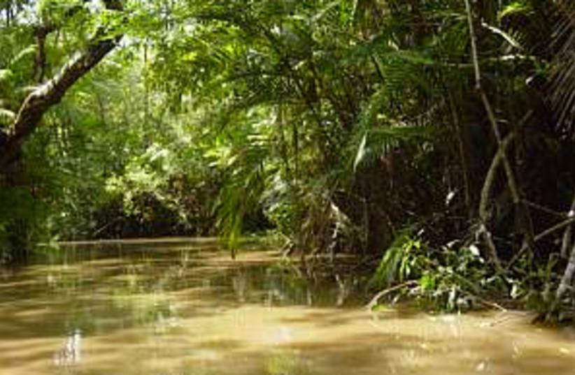 amazon forest 298.88 (photo credit: Courtesy)