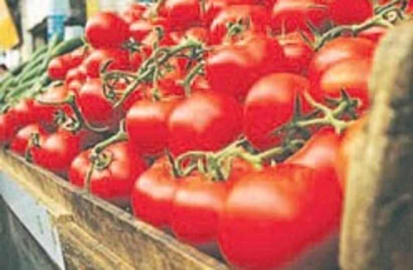 tomatoes 248.88 (photo credit: Elise Best )