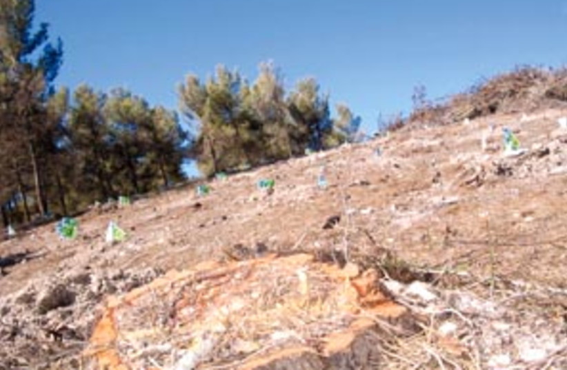 new saplings 88 298 (photo credit: Sam Ser)