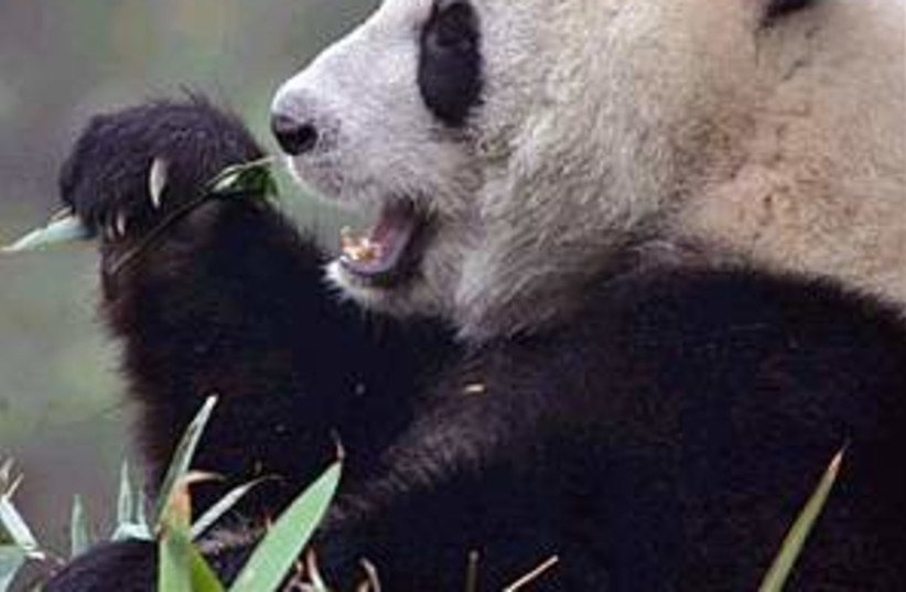 panda leaf 298.88 (photo credit: AP [file])