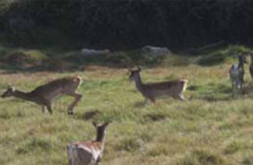 Wild animals (photo credit:  AVIVA BAR-AM )