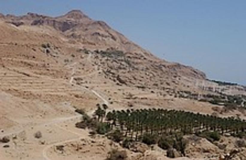 desert forests 224.88 (photo credit: Ariel Jerozolimiski)