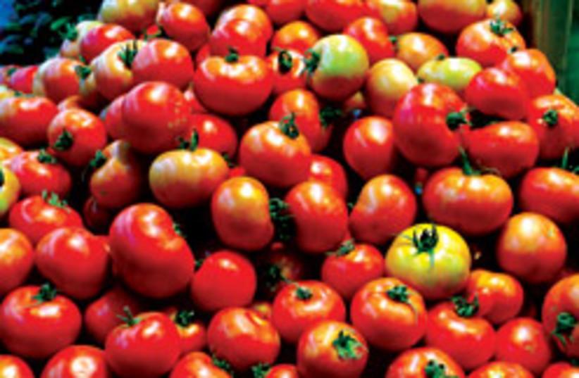 tomatoes (photo credit: Ariel Jerozolimski)