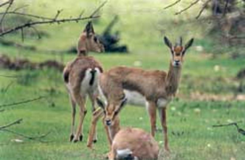 jlem deer park 248.88 (photo credit: Amir Balaban)