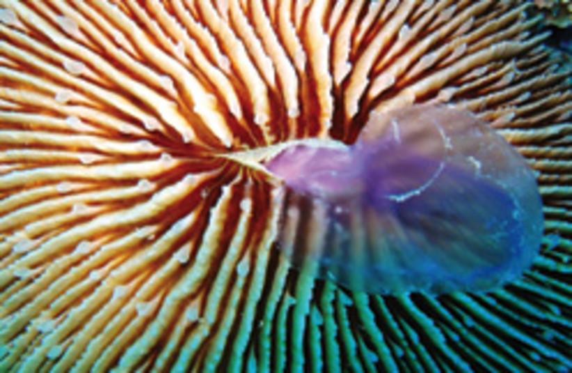 jellyfish 248.88 (photo credit: )