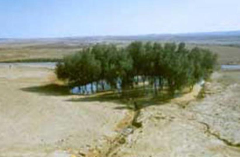 KKL oasis top (photo credit: KKL)