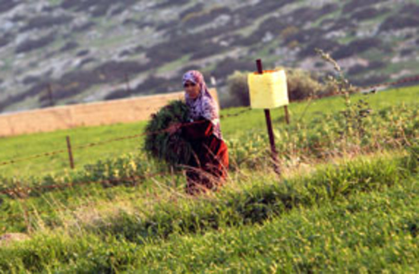 palestinian woman 311 (photo credit: AP)