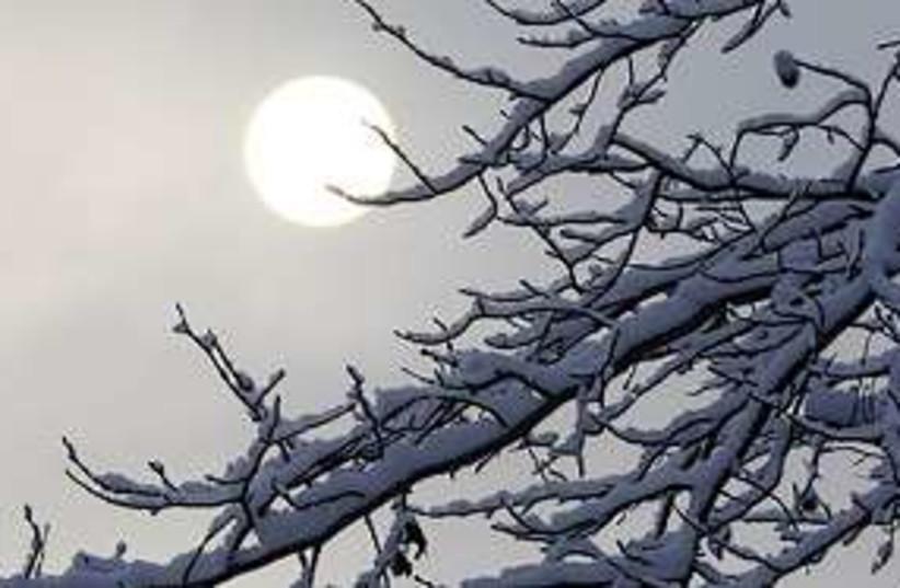 snow sun tree 311 (photo credit: AP)