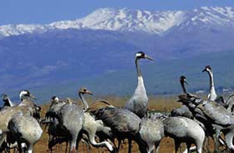 birds 311 (photo credit: Yossi Eshbol)