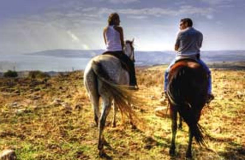 vered hagalil horses 311 (photo credit: Courtesy)