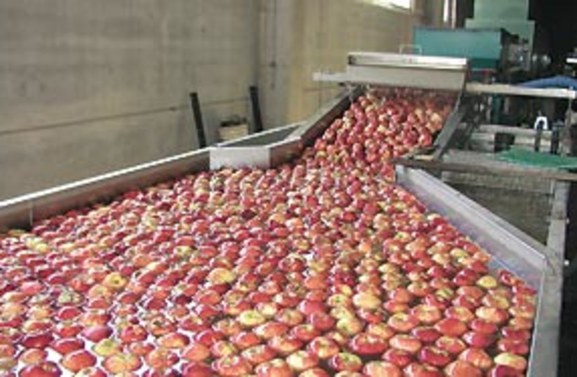 red apples syria 311 (photo credit: Ran Shadmon / Ministry of Agriculture)