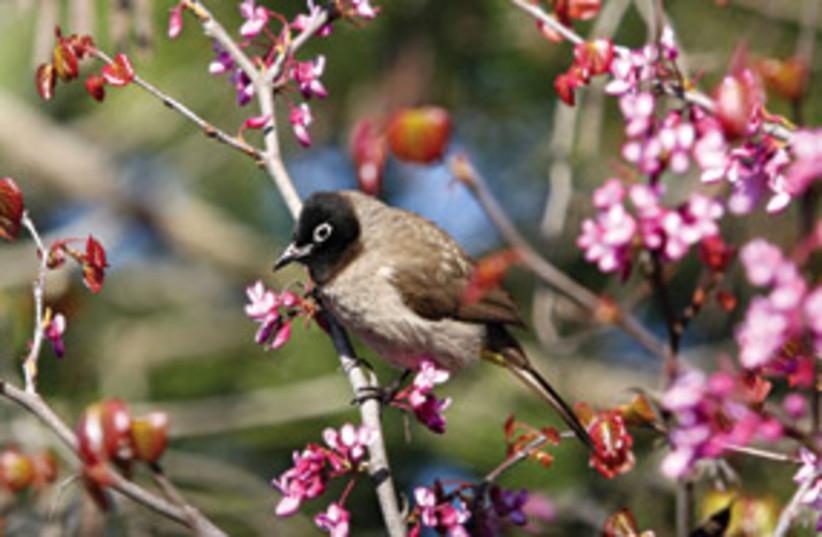 spring flowers 311 (photo credit: Ariel Jerozolimski)