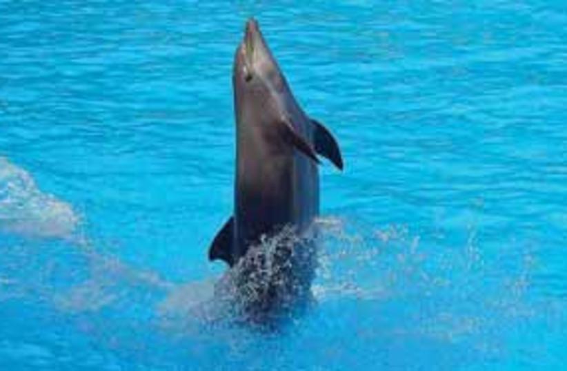 Dolphin 311 (photo credit: .)