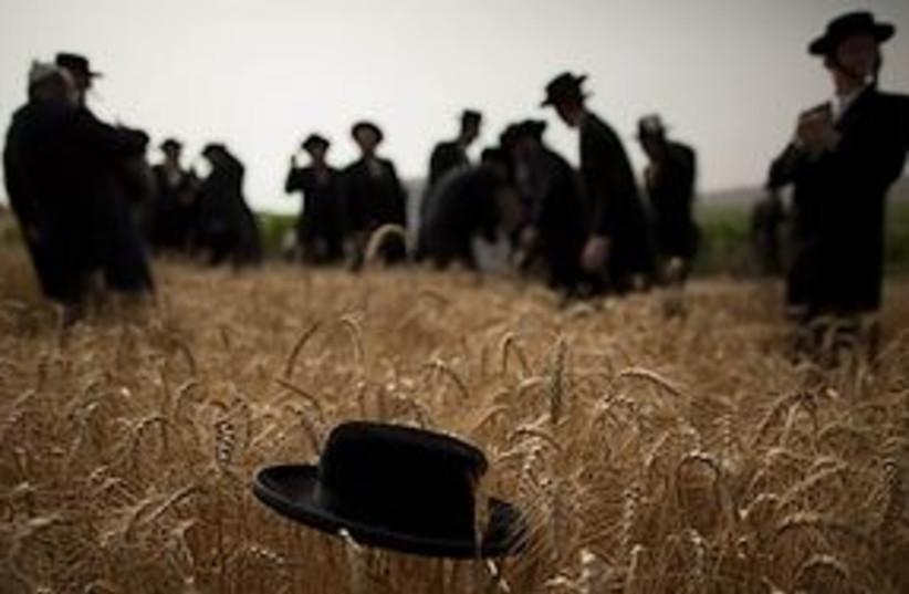 haredim harvesting 311 (photo credit: AP)