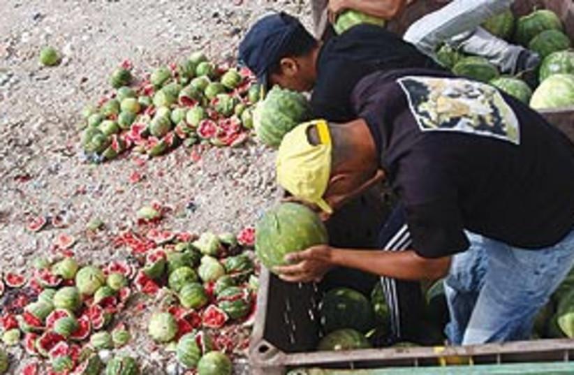 PADestroyWatermelons (photo credit: Associated Press)