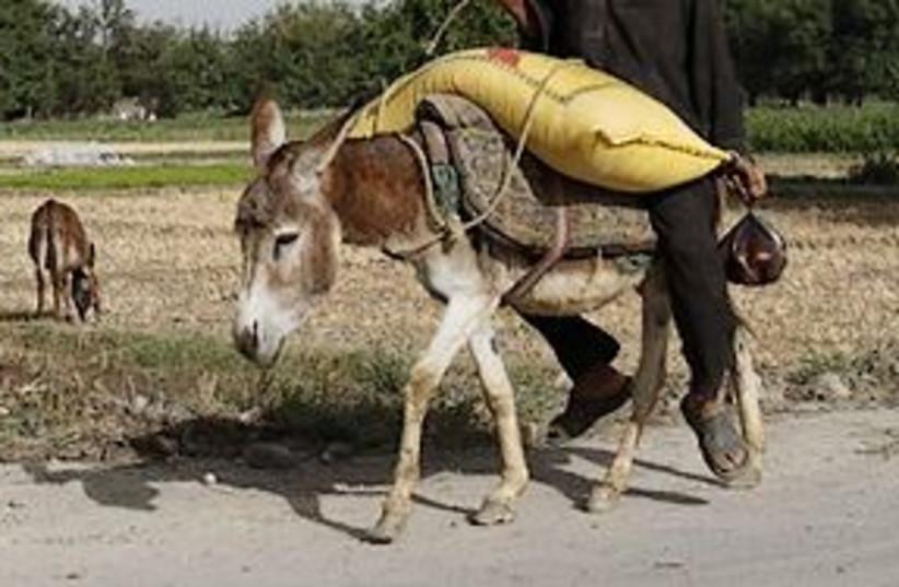 donkey 311 (photo credit: AP)