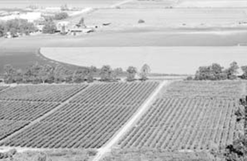 agriculture biz 88 298 (photo credit: Ariel Jerozolimski)