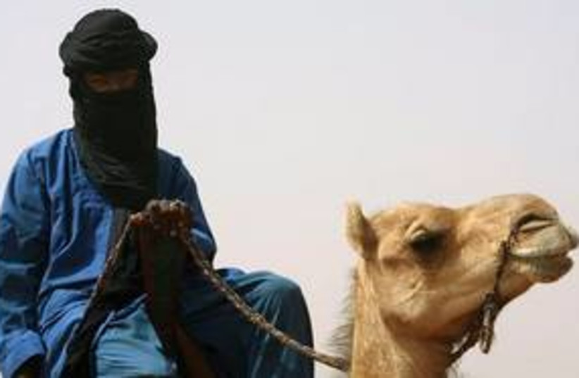 al qaida camel 311 (photo credit: Associated Press)
