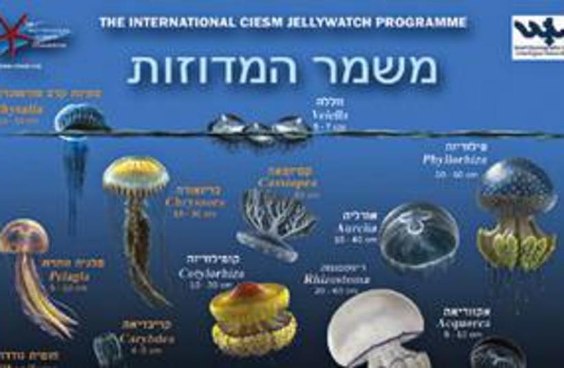 jellyfish 311 (photo credit: Courtesy)