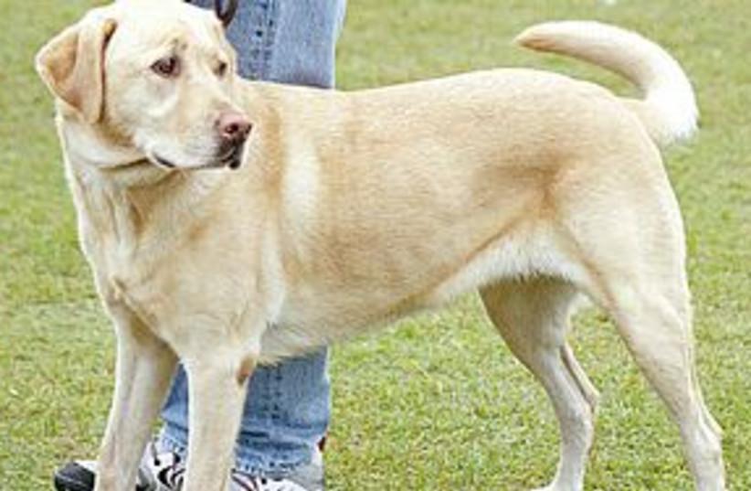 dog 311 (photo credit: courtesy)