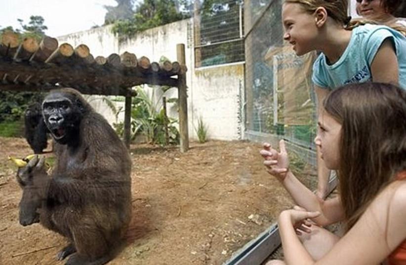Children watch a Silver-Back female gorilla eat a banana