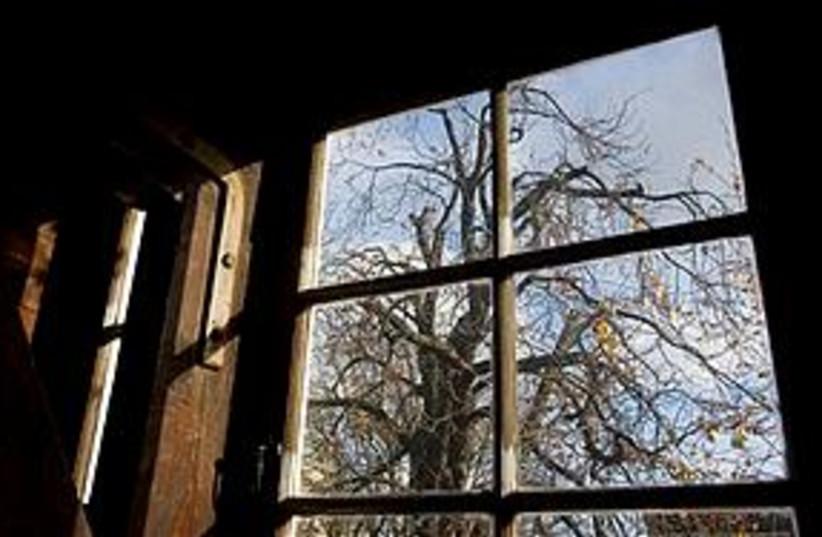 anne frank tree 311 (photo credit: AP)