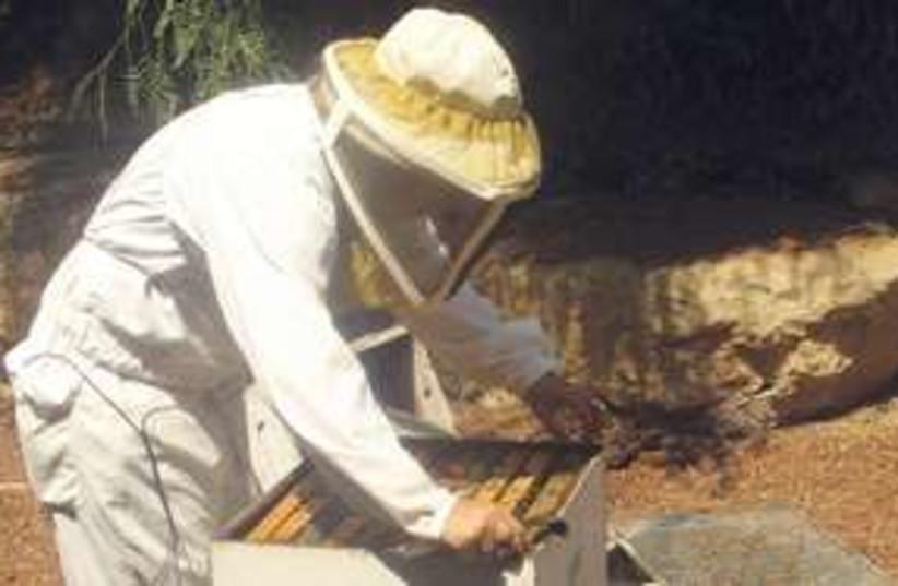 Bee keeper 311 (photo credit: Alessandra Da Pra)