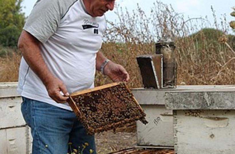 yoram paz bees 298.88 (photo credit: Courtesy)
