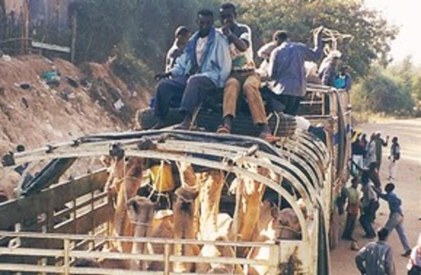 Kenya 311 (photo credit: Eldad Brin)