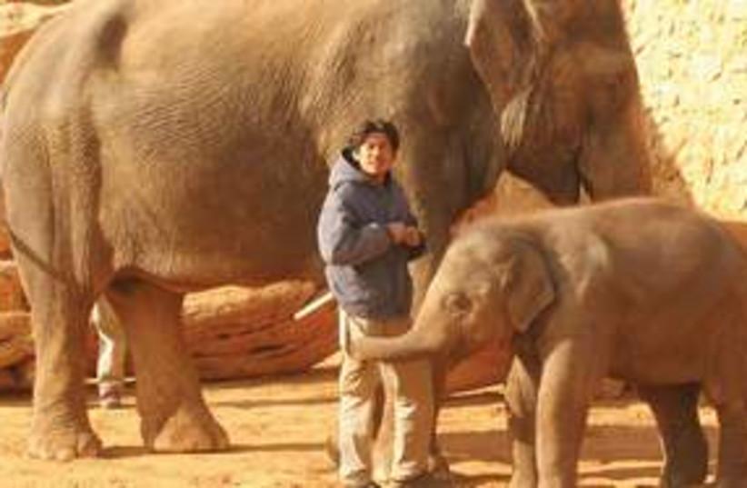Elephant 311 (photo credit: Adi Philipsborn)