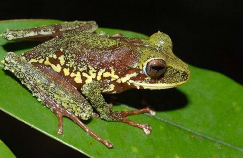 New species found in Papa New Guinea