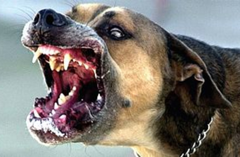 scary dog 311 (photo credit: (Frank Rivera/The Orlando Sentinel/MCT).)