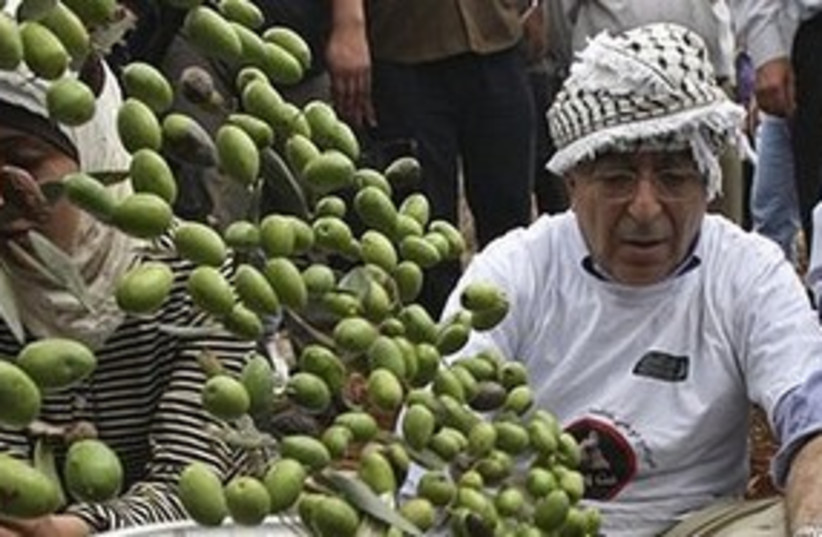 Fayyad olives 311 AP (photo credit: Associated Press)
