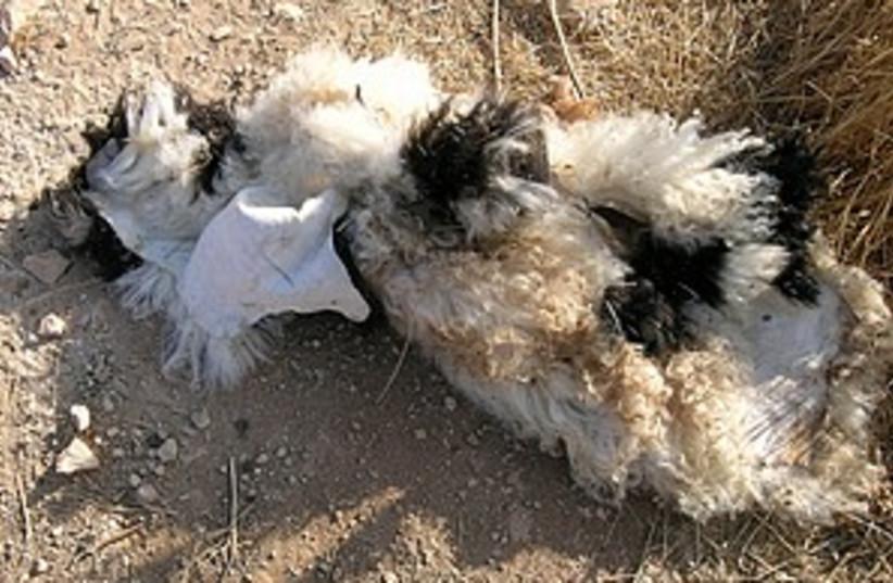 lamb bomb 298.88 (photo credit: IDF)