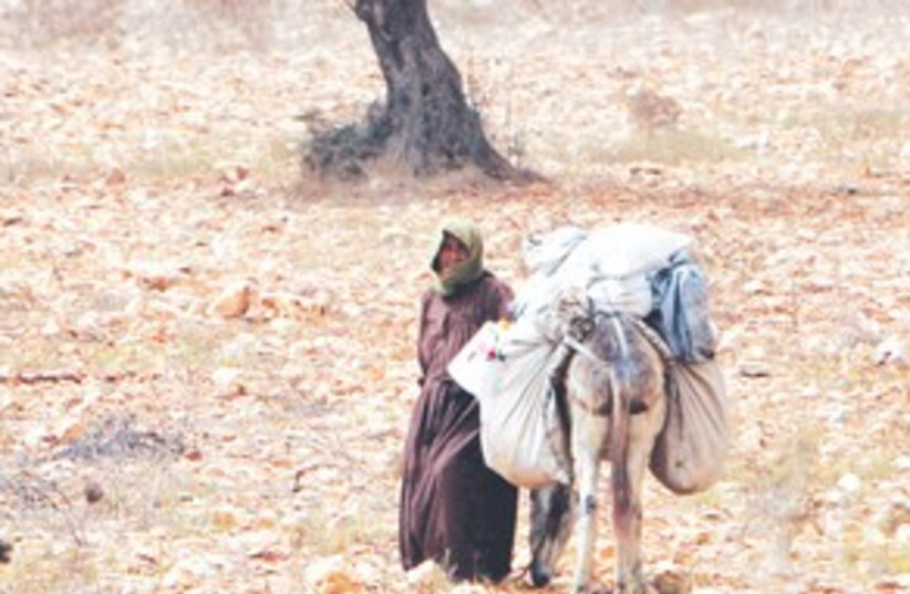 Palestinian Farmer 311 (photo credit: ASSOCIATED PRESS)