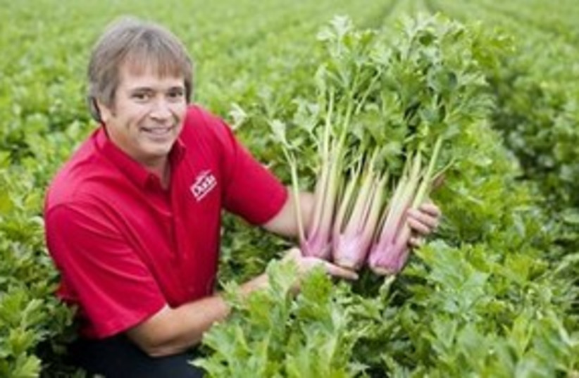 red celery 311 (photo credit: ASSOCIATED PRESS)