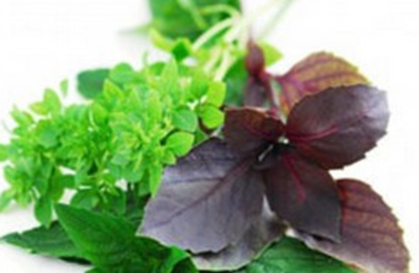 Herbs 311 (photo credit: mygourmetconnection.com)
