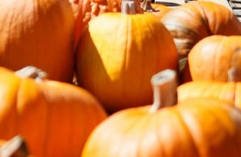 Pumpkin 311 (photo credit: ASSOCIATED PRESS)