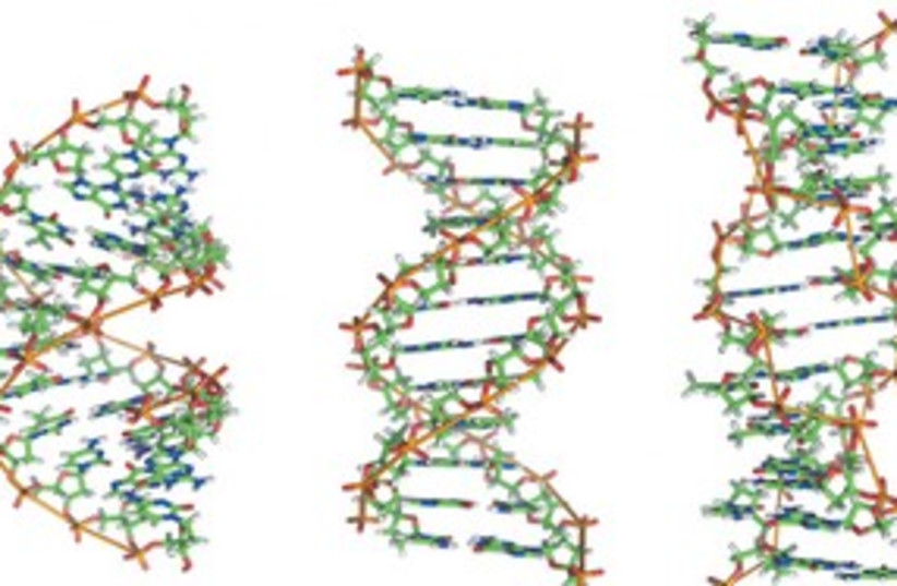 Strings of DNA 311 (photo credit: Wikipedia images)